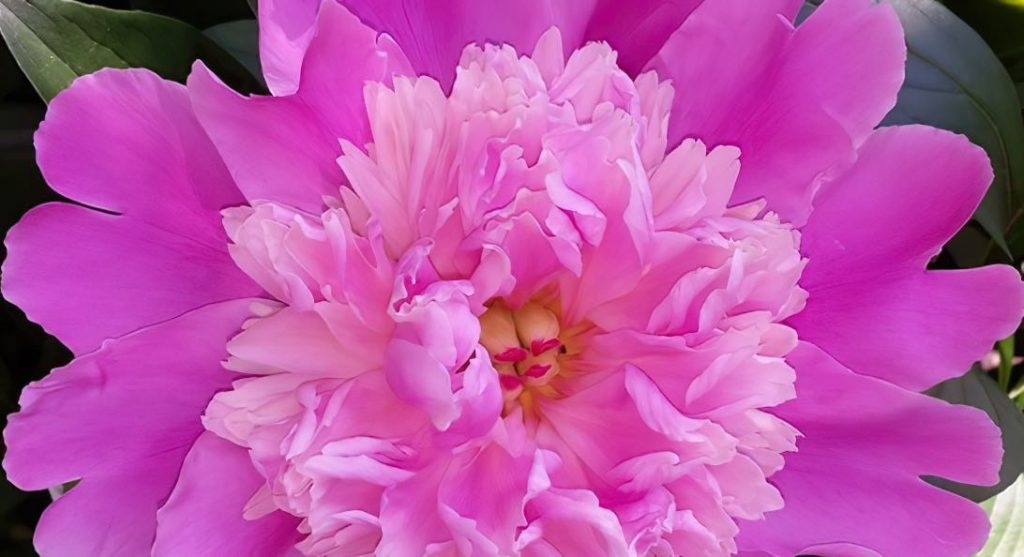 FB-Flower-2X