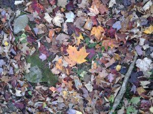 Autumn Tune Up